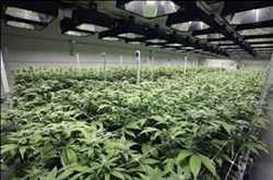 상업용 대마초 제습기 시장