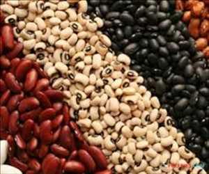 글로벌 식물성 단백질 성분 시장